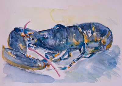 Lobster watercolour sketch